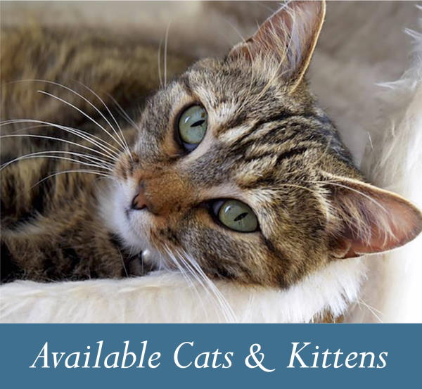 Available cats and kittens