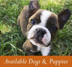 available dogs and puppies