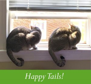 happy tails stories of adoptions
