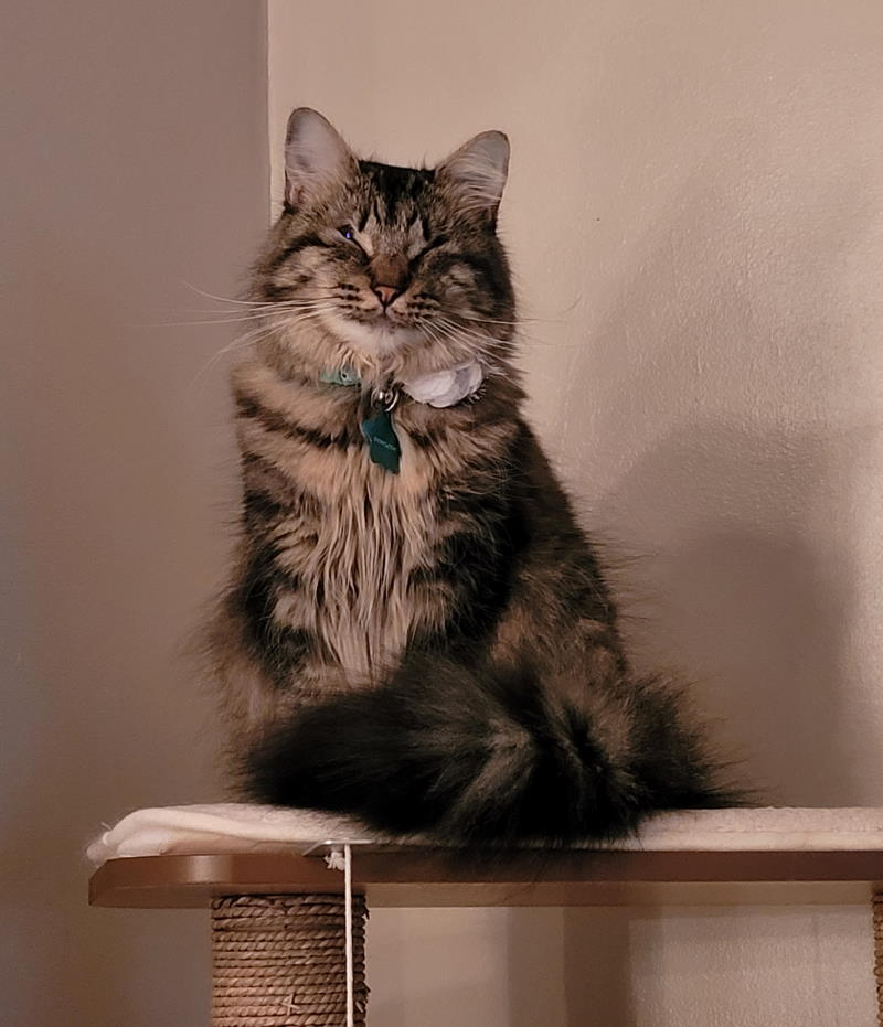 cat named Penelope